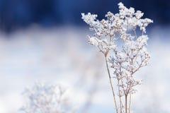 Traw gałąź marznąć w lodzie Zamarznięta trawy gałąź w zimie oddział objętych śnieg Zdjęcia Stock