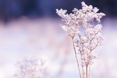 Traw gałąź marznąć w lodzie Zamarznięta trawy gałąź w zimie oddział objętych śnieg Obraz Stock