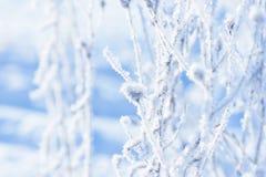 Traw gałąź marznąć w lodzie Zamarznięta trawy gałąź w zimie oddział objętych śnieg Obrazy Royalty Free