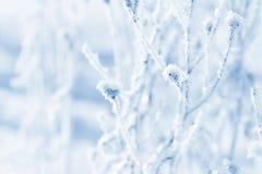 Traw gałąź marznąć w lodzie Zamarznięta trawy gałąź w zimie oddział objętych śnieg Obraz Royalty Free
