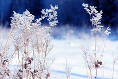 Traw gałąź marznąć w lodzie Zamarznięta trawy gałąź w zimie oddział objętych śnieg Fotografia Stock