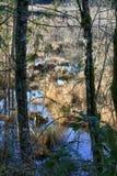 Traw kałuże pod drzewami Zdjęcie Stock