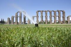Traw kropidła z Romańskim akweduktem Zdjęcia Stock