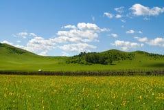 Traw pola i słońca niebo z piękną chmurą Fotografia Royalty Free
