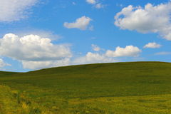 Traw pola i słońca niebo z piękną chmurą Zdjęcia Royalty Free