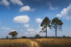 Traw pola pod niebieskim niebem Obraz Royalty Free