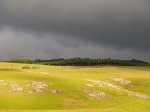Traw pola przed burzą Obrazy Royalty Free