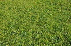Traw pola w ogródzie pod wieczór słońcem zaświecają Zdjęcia Stock