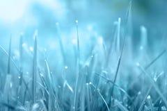 Trawa Abstrakcjonistyczny błękitny tło robić od naturalnych ziele z rosa kropel zbliżeniem słońce miękkie ogniska, tło abstrakcyj zdjęcie stock