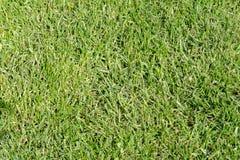 Trawa Bujny, zielona gazon trawa Golf, futbol Obrazy Royalty Free