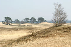 trawa dryftowi drzewa piasku. Fotografia Stock