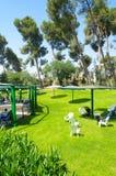 Trawa, drzewa, parasole i krzesła dla wakacji letnich, Obraz Royalty Free