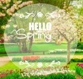 Trawa gazon z daffodils w wiosna ogródzie ilustracja wektor