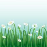 Trawa i biali kwiaty graniczymy z niebieskiego nieba tłem Obrazy Stock