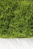 Trawa i cement Zdjęcie Stock