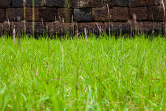 Trawa i ściana Zdjęcie Stock