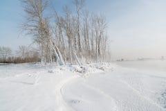 Trawa i drzewa Zdjęcie Royalty Free