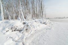 Trawa i drzewa zakrywający z mrozem Zdjęcie Royalty Free