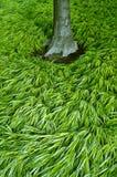 Trawa i drzewny bagażnik Zdjęcia Stock