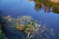 Trawa i jesień liście w wodzie Fotografia Stock