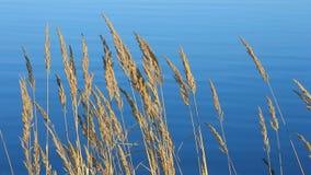 Trawa i jezioro zbiory wideo