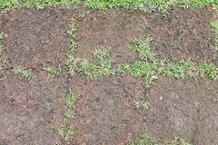 Trawa i kamienie jako tło tekstura Obraz Stock