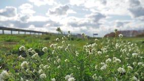 Trawa i kwiaty r blisko drogowego ruchu drogowego ruchu drogowego samochody pszczoła zapyla kwiaty obok autostrady Autobahn zbiory wideo