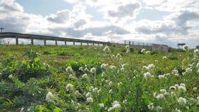 Trawa i kwiaty r blisko drogowego ruchu drogowego ruchu drogowego samochody pszczoła zapyla kwiaty obok autostrady Autobahn zbiory
