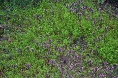 Trawa i kwiaty w Marzec Fotografia Royalty Free