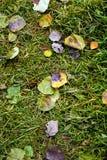 Trawa i liście Zdjęcie Stock