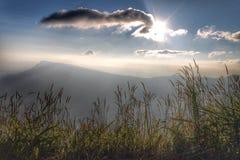 Trawa i niebo Zdjęcia Stock