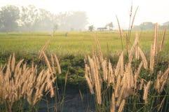 Trawa i pole Obrazy Stock