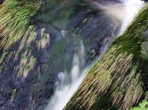 Trawa i skały w strumyku Obrazy Royalty Free