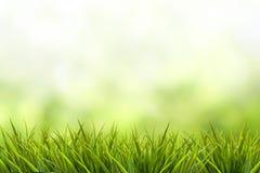 Trawa i zieleni zamazany tło zdjęcia stock