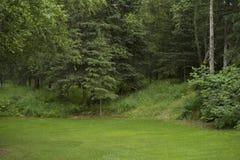Trawa jard z gęstymi drewnami Obrazy Stock