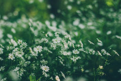 Trawa jest ziele obrazy stock