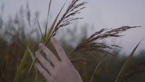 Trawa kiwa na verte jest stosownym dziewczyną i dotyka ona zbiory
