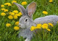 trawa królik. Obrazy Royalty Free