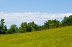 trawa krajobraz Zdjęcia Royalty Free