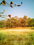 Trawa krajobraz w lesie Zdjęcie Royalty Free