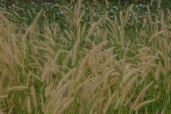 Trawa kwiatów pole w kontekście niebieskie chmury odpowiadają trawy zielone niebo białe wispy natury Zdjęcia Royalty Free