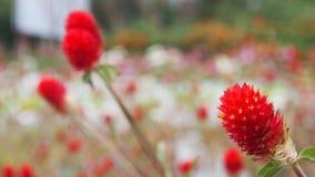 Trawa kwiat fotografia royalty free