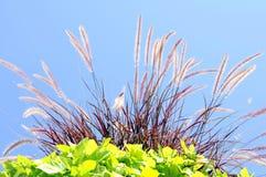 Trawa kwiat Obraz Stock