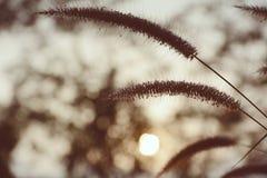 Trawa kwiat Fotografia Stock