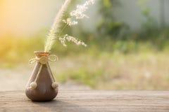 Trawa kwiat w wazowej, selekcyjnej ostrości, Zdjęcia Royalty Free