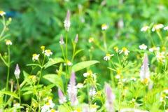 Trawa kwiat z liściem w polu z liśćmi na drzewie w ogrodowym zamazanym tle Używać tapetę lub tło dla natura Obraz Stock