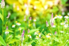 Trawa kwiat z liściem w polu z liśćmi na drzewie w ogrodowym zamazanym tle Używać tapetę lub tło dla natura Fotografia Stock