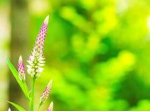 Trawa kwiat z liściem w polu z liśćmi na drzewie w ogrodowym zamazanym tle Używać tapetę lub tło dla natura Zdjęcie Royalty Free