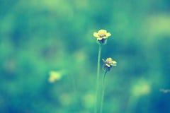 Trawa kwiatu miękka ostrość, abstrakcjonistyczny wiosny lata backgr Zdjęcia Royalty Free