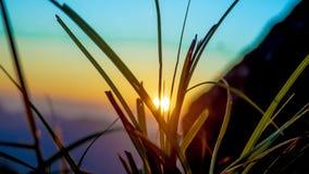 Trawa kwiatu pole Przy wschód słońca Zamazanym tłem obrazy stock